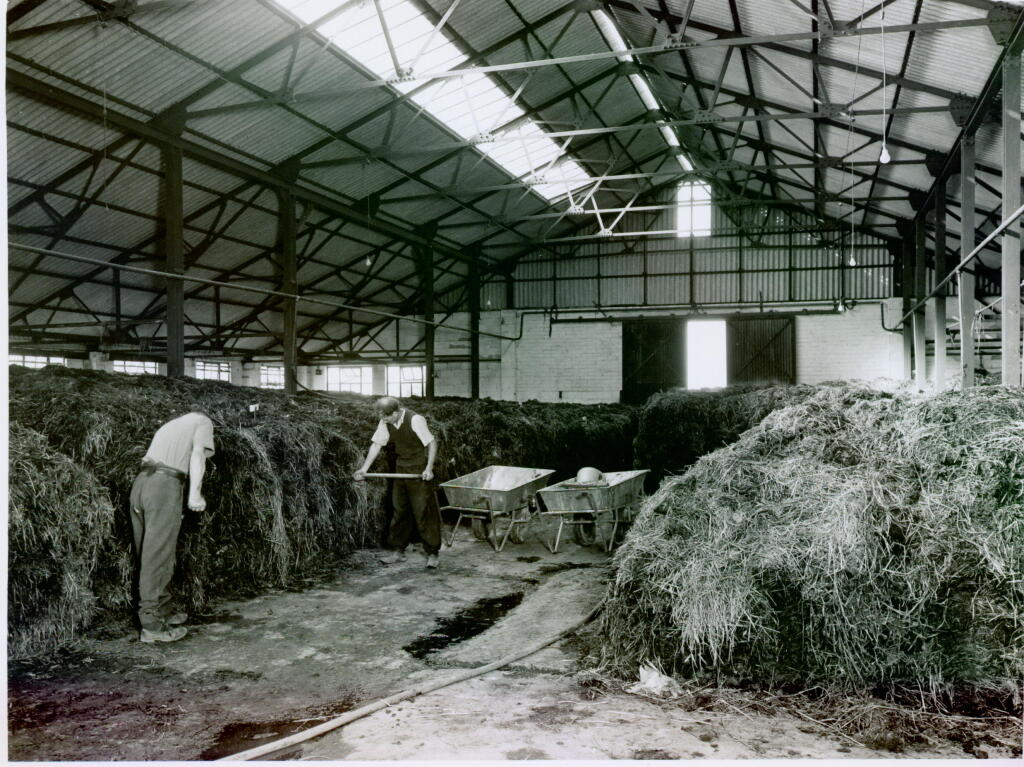 Indoor compost yard, Town House Farm c. 1950 Jack Kent