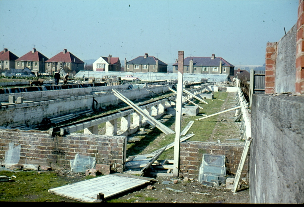 Figure 7. The old nursery is dismantled, 1965. The Lyon family home, which was built in 1928, is the detached house in the middle