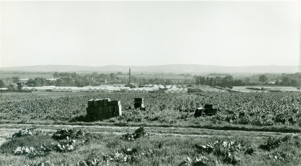 Fig.5 Panoramic view of the Linfield nurseries at Thakeham, as Kenyatta would have known them.
